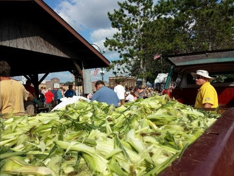 Corn Feed 2014 Corn Husks
